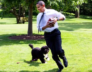 White-house-dog