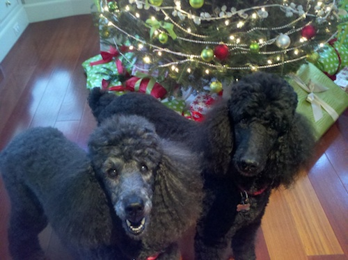 Bella and DiDi at Christmas copy