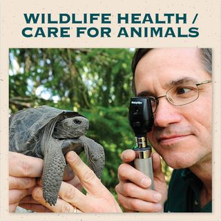 Wildlife Heathcare