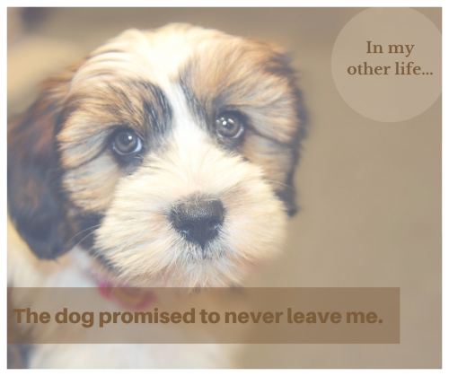 Little dog promised