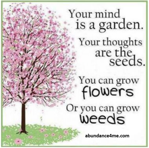 Mind is a garden from abundance4me
