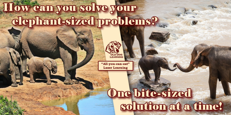 Elephant-Sized-Problems-One-Bite-Sized-Solution
